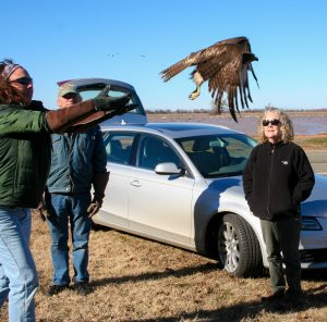 wildlife rehabilitation, and release, wildlife rescue - Red Tail Hawk Release with Beth and Laurel 2