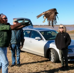 Red Tail Hawk Release with Beth and Laurel 2