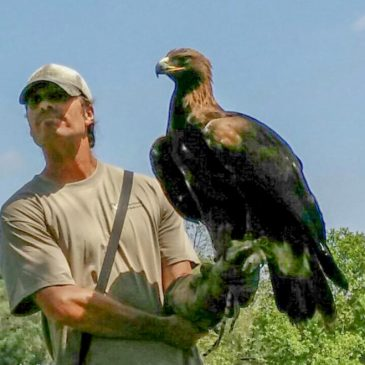 Our Golden Eagle's Doing Fine