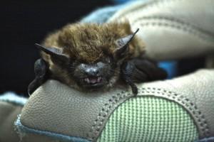 bat2-copy